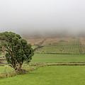 Lonley Tree Dingle Ireland  by John McGraw