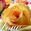 Love by Amy Dundon