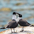 Love Birds by Dheeraj Mutha