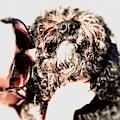 Love Dog 1 by Cindy Greenstein