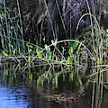 Lovely Swamp by Carol Groenen