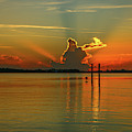Low Flying Pelican Sunrise by Tom Claud