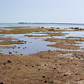 Low Tide In Nabq Bay by Sun Travels