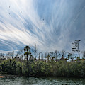 Lowcountry Summer Sky by Dale Powell