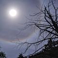 Lunar Halo And Tree by Chance Kafka