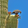 Lunch On A Cactus