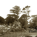 Lunching Grove 17 Mile Drive Pebble Beach by California Views Archives Mr Pat Hathaway Archives