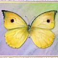 Lycorias Butterfly by Amy Kirkpatrick