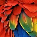 Macaw Feathers I I I by Rob Hans