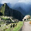 Machu Picchu And Llamas by James Brunker