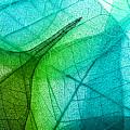 Macro Leaves Background Texture by Valentina Razumova