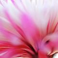 Macro Photo Of A Beautiful Flower. Chrysanthemum. by Laurent Lucuix