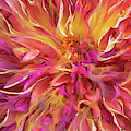 Magenta Sunshine by Cindy Greenstein