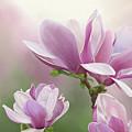 Magnolia by Tanja Udelhofen