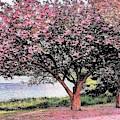 Magnolias By The Lake by Kim Bemis