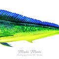 Mahi Mahi by Charles Harden