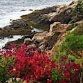 Maine Coastline by Walt Sterneman