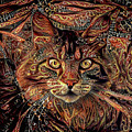 Maine Coon Cat by Peggy Collins