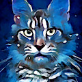 Maine Coon by Chris Butler