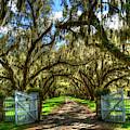 Majestic Shadows Tomotley Plantation Live Oak Trees Lowcountry South Carolina Landscape Art by Reid Callaway