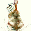 Cottontail by Philip and Karen Rispin