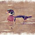 Male Wood Duck      Paintography by Dan Friend