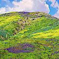 Malibu's Amazing Superbloom Landscape by Lynn Bauer