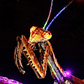 Mantis by Skip Hunt