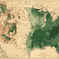 Map Of American Forests 1883 by Andrew Fare