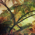 Maple Expression 5585_idp_me_2 by Steven Ward
