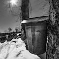 Maple Sap Bucket by Joann Vitali