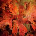 Maples Last Show 6138 Idp_2 by Steven Ward
