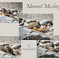 Marmot Mischief For Smaller Sized Prints by Michael Chatt