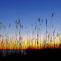 Marsh Grass Silhouette  by Jeff Sinon