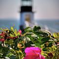 Marshall Point Lighthouse - Maine by Joann Vitali