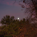 Marvelous Moonrise by Alison Frank