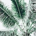 Maui Paradise Palm Hawaii by Sharon Mau