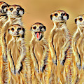 Meerkat Family by Russ Carts