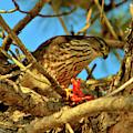 Merlin Eating Breakfast by Debbie Stahre