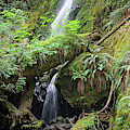 Merriman Falls Olympic National Park D by Bruce Gourley