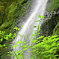 Merriman Falls Olympic National Park E by Bruce Gourley