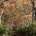 Merwin Falling Trail by Dylan Punke