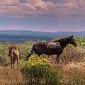 Mesa Verde Wild Horses #2 by Blake Webster