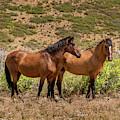 Mesa Verde Wild Horses by Blake Webster