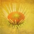 Mid Bloom by Scott Kemper