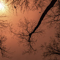 Midwest Trees On Fire by Jean Noren