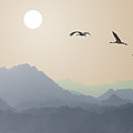 Migrating Cranes To The Sun Over The by Protasov An