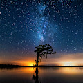 Milky Way Swamp by Andy Crawford