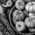 Mimi Pumpkins In Wicker Bowl Black And White by Garry Gay