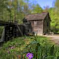 Mingus Mill Spring Flowers by Dan Sproul